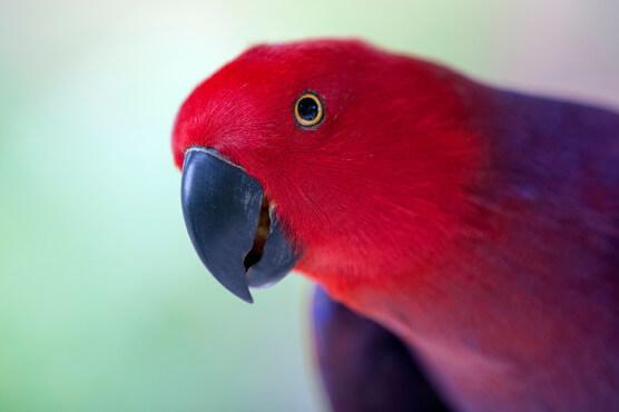 Avian Medicine Pdf